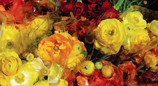 Ranunculus need a mild winter climate and sandy soil.