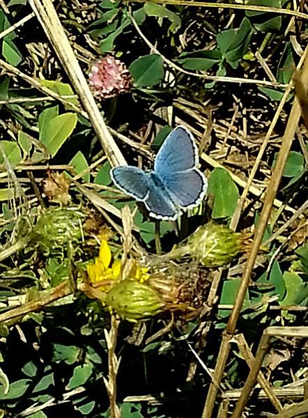 Butterflies flutter along the Conejos trail.