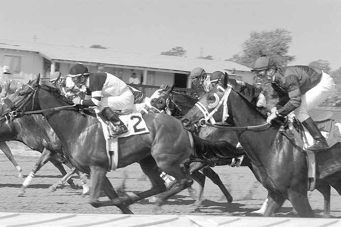 Sooner or later a horse loaded with banned drugs will stumble or fall during a race.  - Image by Joe Klein
