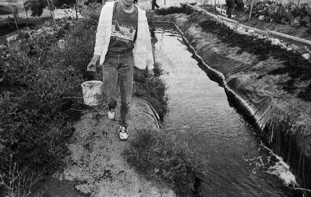 Fishpond, December 1994