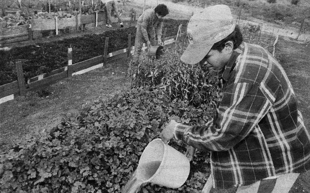 Tending Everett's garden, December 1994