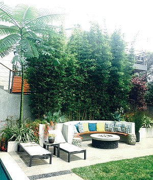 Ron Bocian designed UCLA football coach Jim Mora's landscape. The bamboo and fern trees, though very lush, require a fraction of the water a lawn requires. They are on drip irrigation, and despite a hot summer are thriving on the mandated water restriction from 2014.