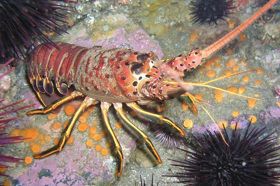 Lobster Restaurant San Diego Ca