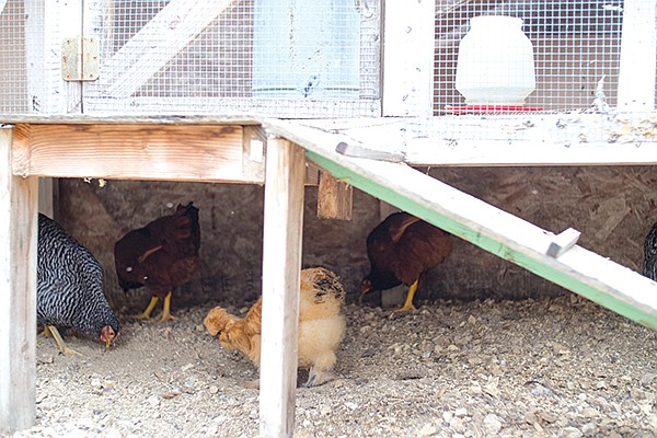 The chicken coop at Mission Hills Nursery