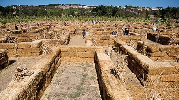 Bates Nut Farm Straw Bale Maze