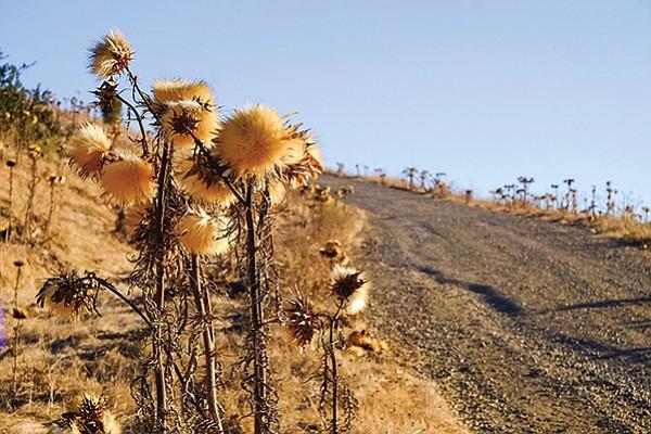 Santaluz hiking trail