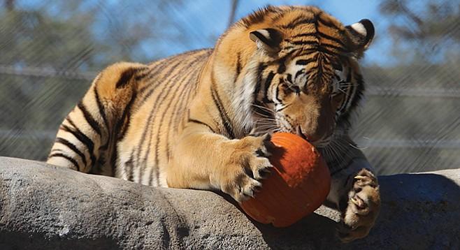 Friday, October 28: Spooky Campover