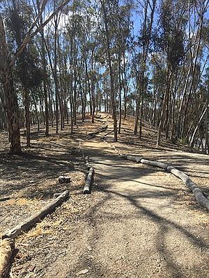 East Grove trail