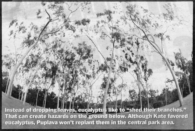 Eucalyptus grove, Balboa Park