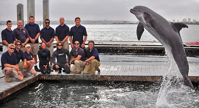 The Navy's San Diego dolphin-training team