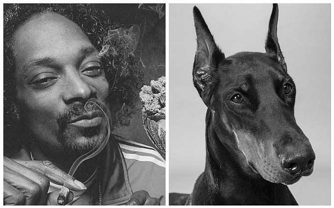 "Rapper Snoop Dogg scored a sick hit with ""Smoke Weed Everyday.""