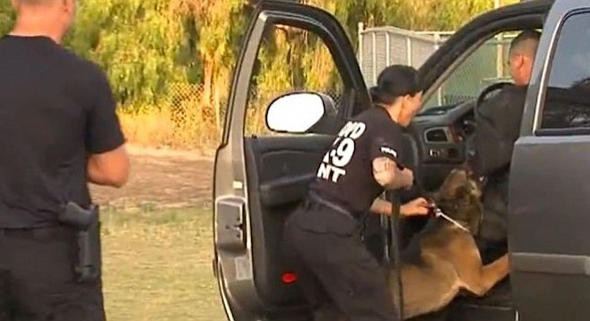 San Diego police K-9 unit being trained
