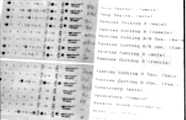 DNA chart. The test copies a section of the DNA sequence, which is unique to each individual.