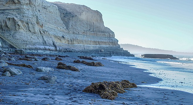 Giant kelp (Macrocyctis pyrifera) often litters the beach segment of the trail.