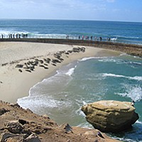 Walk and talk with the Seal Society of San Diego...about seals