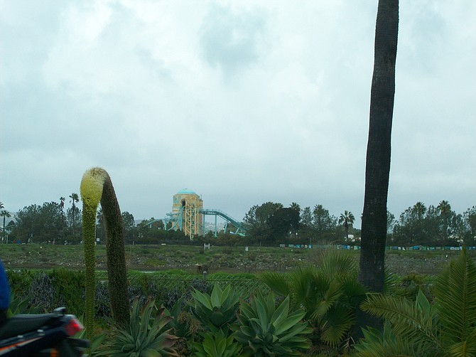 Along the San Diego River Bike Path, with Sea World in the background.