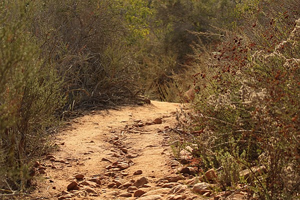 Watch out for erosion and rattlesnakes along the summit trail.
