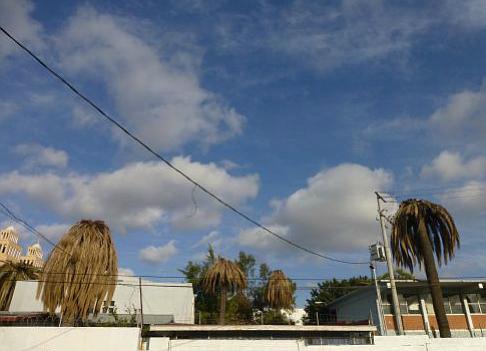 Dead palms at a Tijuana high school