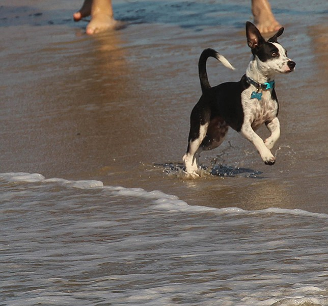 Run. Play. Smile.