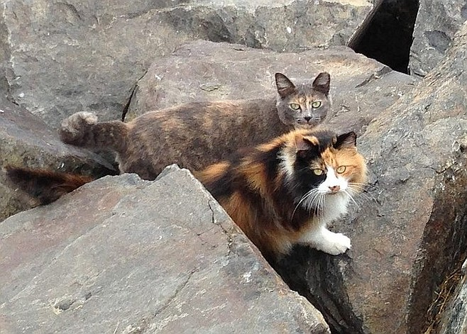 """""""Feral cats are just cats. If you adopt one, you'll find they're so loving and appreciative."""""""