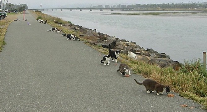 """""""There are now less than 30 cats in the area."""""""
