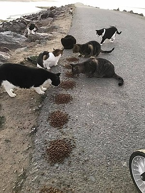 Caretakers feed them every day and trap cats as needed for medical attention.