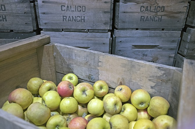 The apple bushels are starting to stack up at Calico Cidery as rain returns to Julian.
