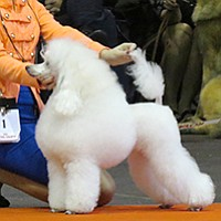Silver Bay Kennel Club: Only professional show dogs allowed.