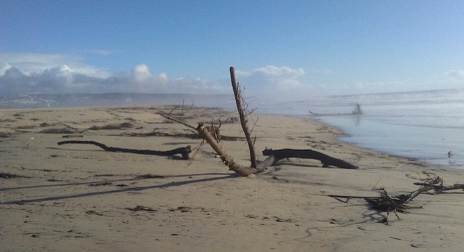 Trees washed up as far north as Dunes Park, where Imperial Beach lifeguards pulled them ashore and cut them up.