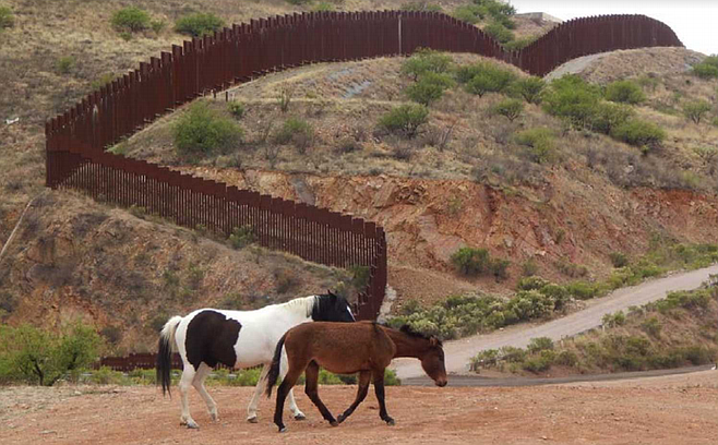 At least in this area, horses seem to be able to cross the U.S.-Mexico border at will