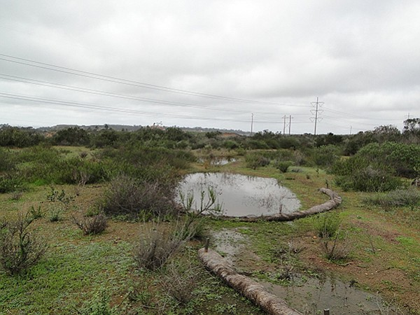 Vernal pool in Carmel Mountain Preserve