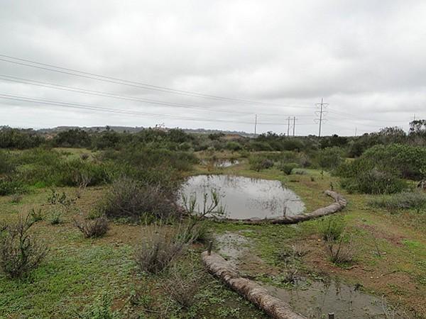 Vernal pool in Carmel Mountain Preserve