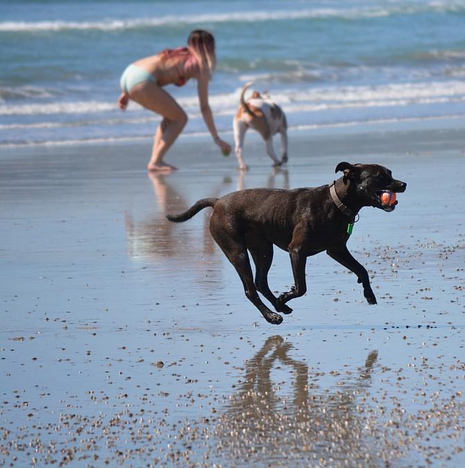 fun at the dog beach.