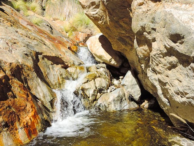 A modest winter waterfall in one of Palm Canyon's groves