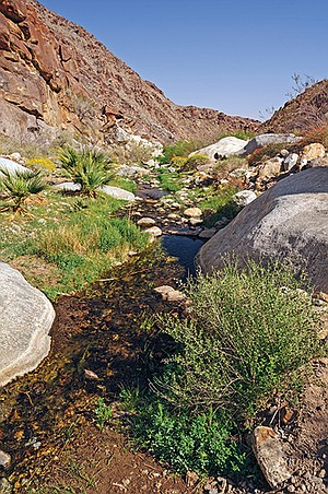 Anza-Borrego Desert Creek emanates from a natural spring...but there are no reservoirs to collect it.