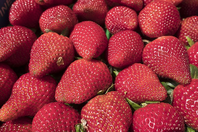 Stehly Farms Organics expects larger-than-average attendance at its annual Strawberry U-Pick Festival on April 8.