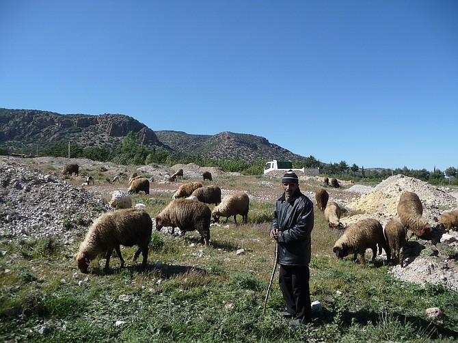 Kurdish Shepherd