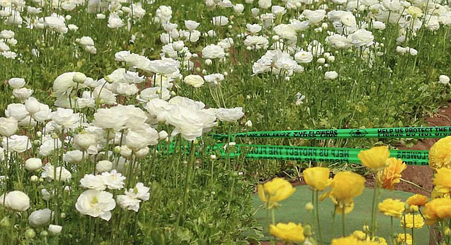Two members of the family stepped slightly on the green tape. A young couple on the opposite corner stepped over the tape and lay inside the flower bed.