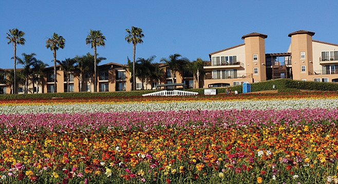 You could cruise to the Mother's Day celebration at the Flower Fields in Carlsbad