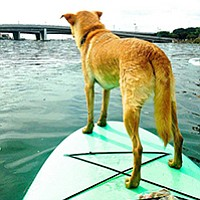 Can your dog do this? Samantha at SUP Pups thinks so.