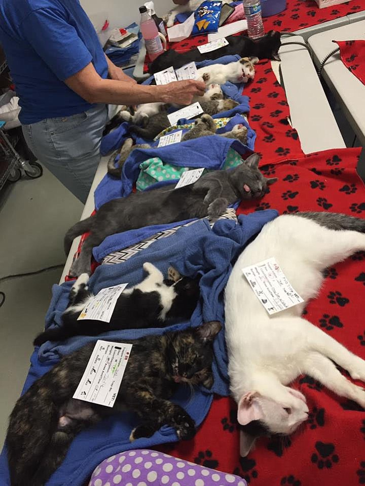 """Cats waiting for surgery. """"We are happily controlling the populations of starving, diseased, and endangered little ones."""""""