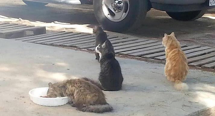 precious cat senior litter reviews