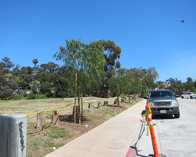 Historic and shady pepper trees used to line the golf course along Juan Street. Most were cut down in 2015 during the Juan Street rehabilitation project.
