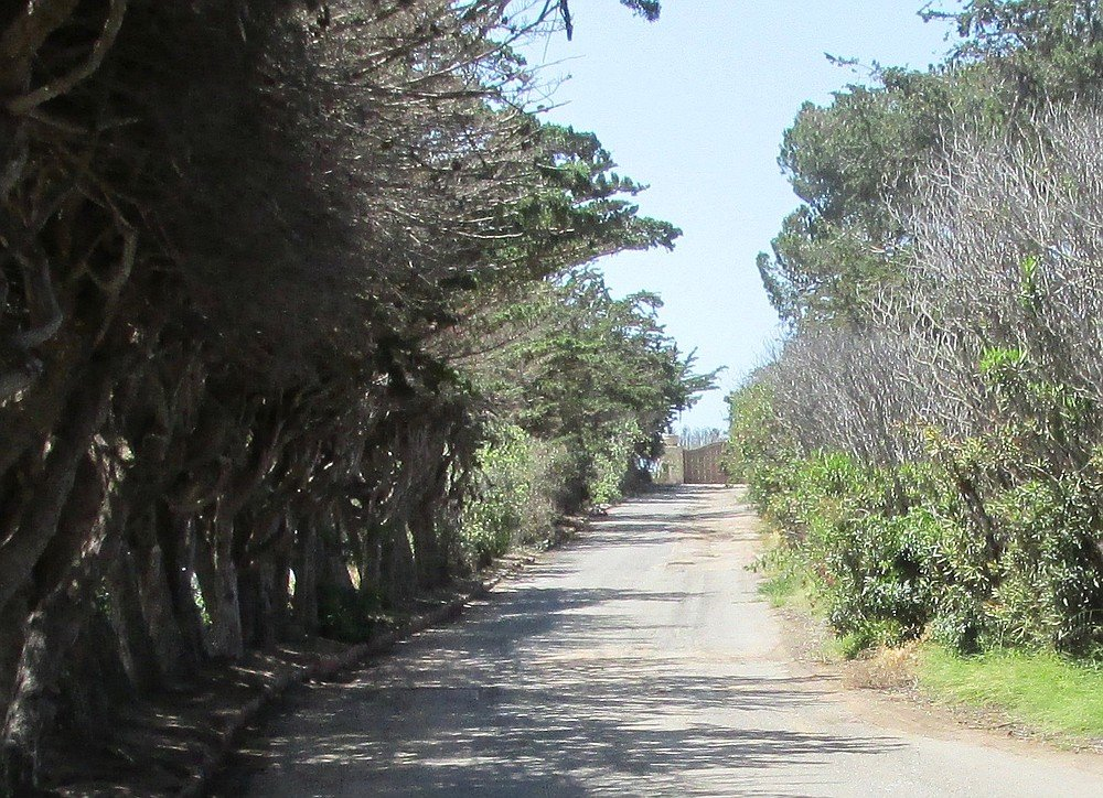 Driveway and security gate. Some of the California Coastal pines trees and palms may be moved.