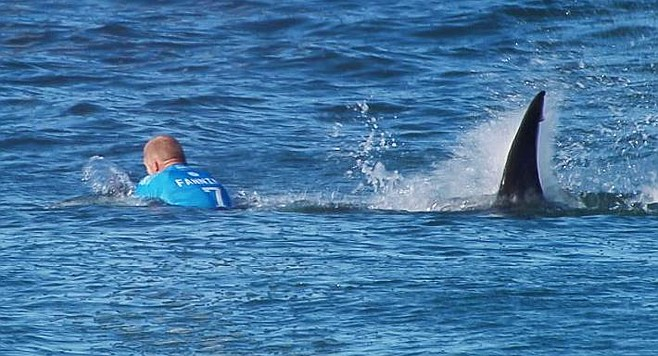 """From National Geographic. """"He avoided the mouth, he struck the shark, and then (he) moved away."""""""