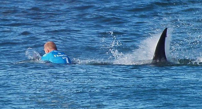 """From National Geographic. """"He avoided the mouth, he struck the shark, and then (he) moved away.""""  - Image by WSL"""