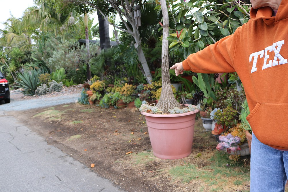 Pat pointing to where the Prius was parked when the plants were jacked, then hand sanitizer applied