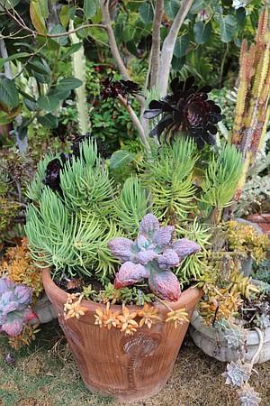 Steve's plants