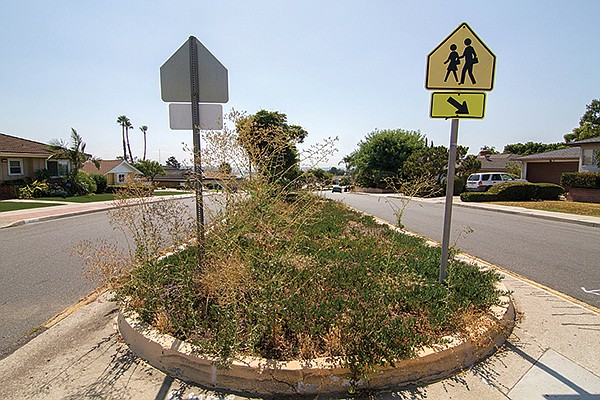 Neglected landscaping on Del Cerro Boulevard