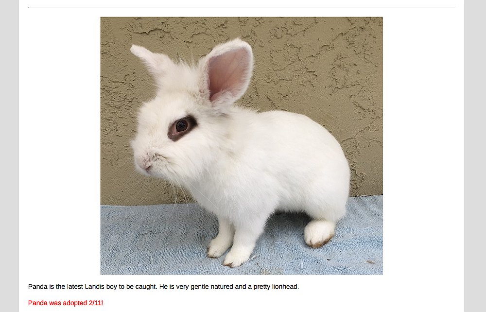 """""""Lionheads are show bunnies that can go for $100 each."""""""